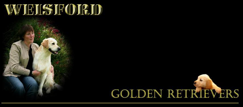 Weisford Golden Retrievers